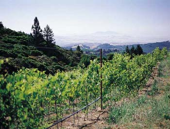 Paras Vineyard, Mount Veeder